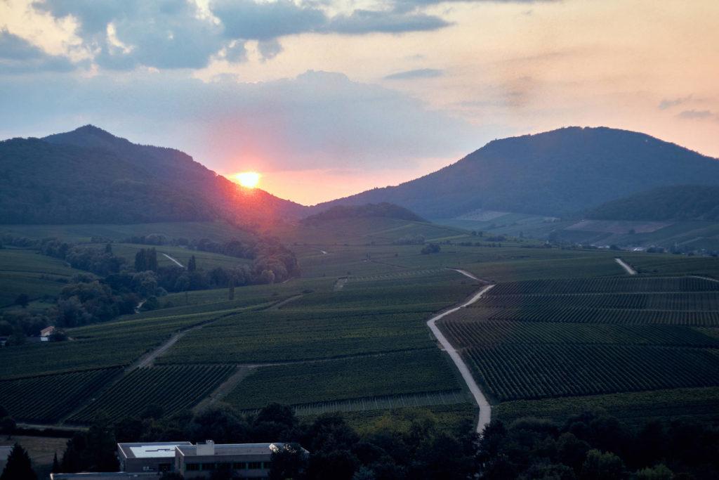 Sonnenuntergang am Haardtrand vor Weinbauregion (Foto: Niko Martin/ thegood.media)